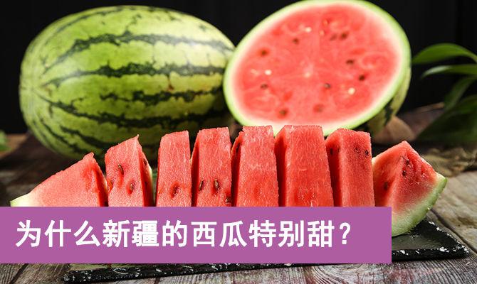 为什么新疆的西瓜特别甜