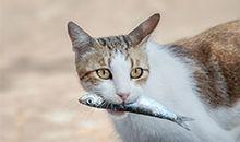 猫咪也会如鲠在喉吗?