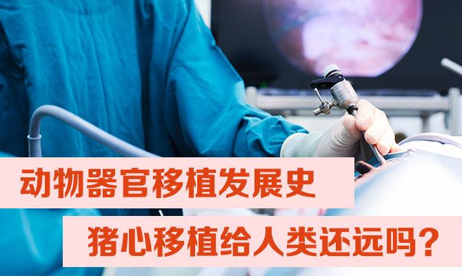 动物器官移植发展史丨猪心移植给人类还远吗?