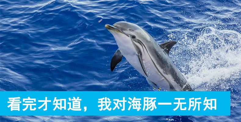 看完才知道,我对海豚一无所知