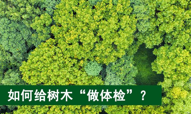 """如何给树木""""做体检""""?"""