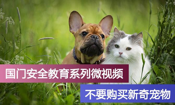 国门安全教育系列微视频--不要购买新奇宠物