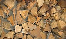 森林固碳的奥秘