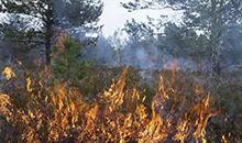森林防火常识